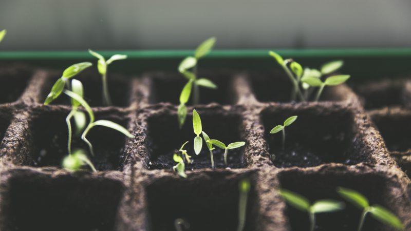 Plants Growing Above Soil